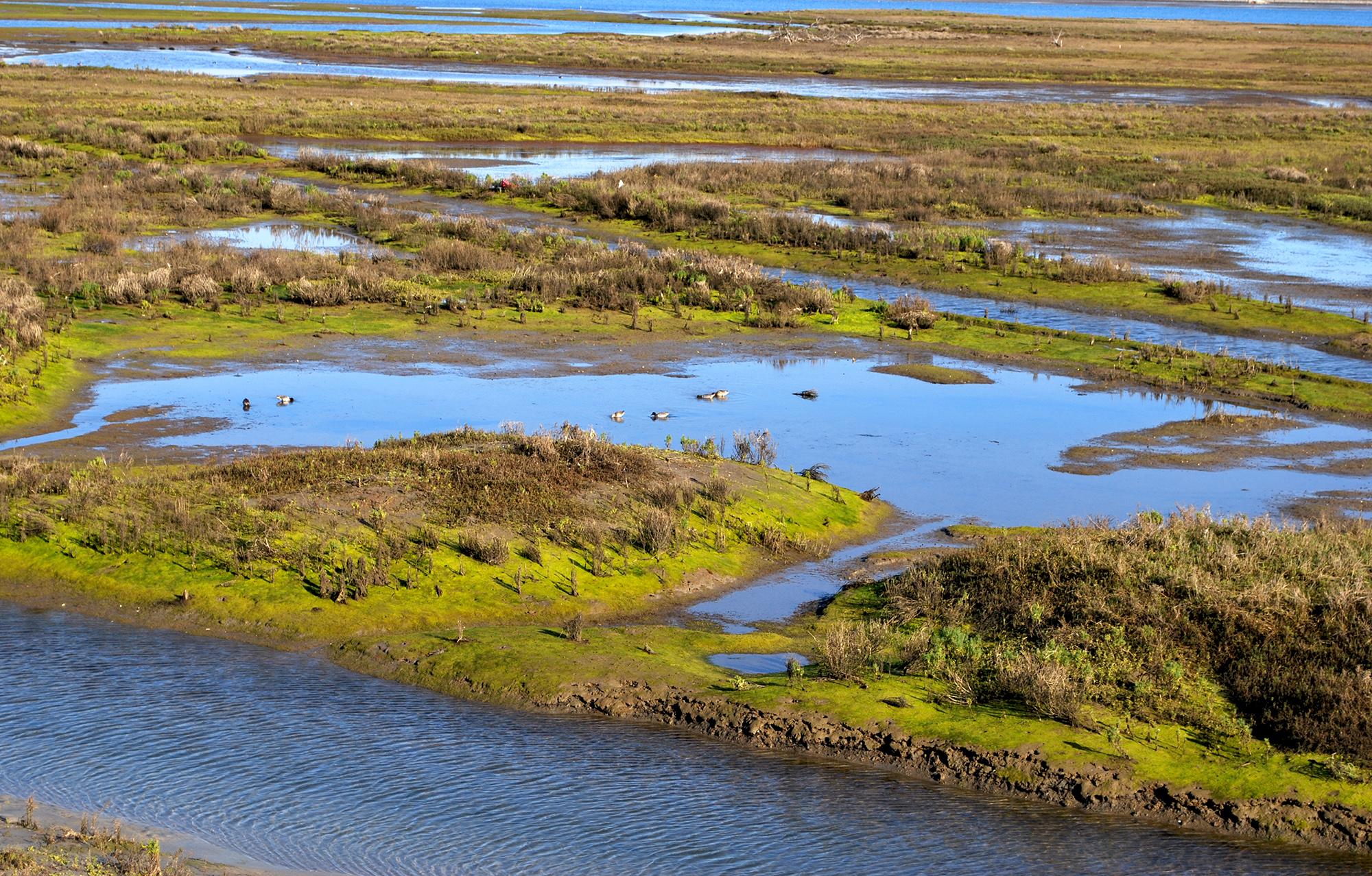 Bolsa Chica Eco Reserve.JPG