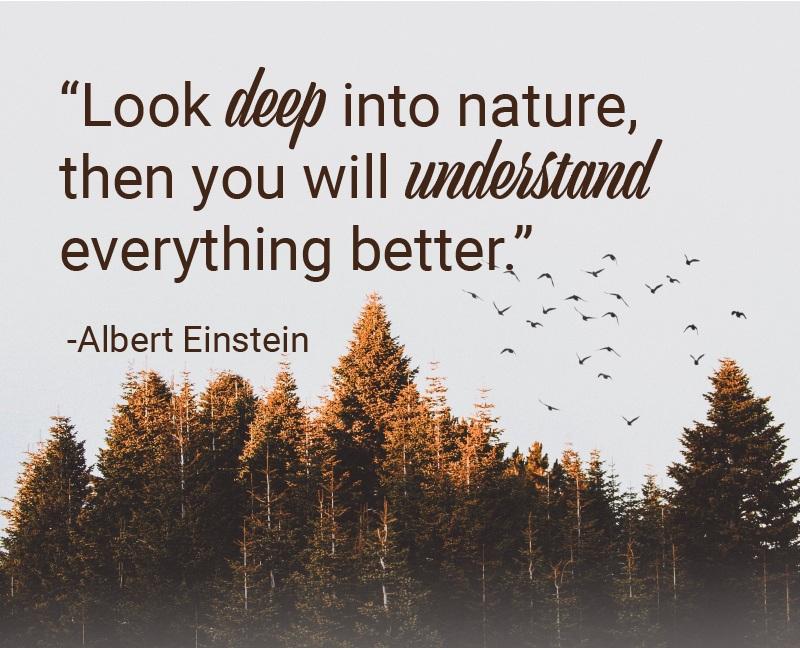 Albert+nature.jpg