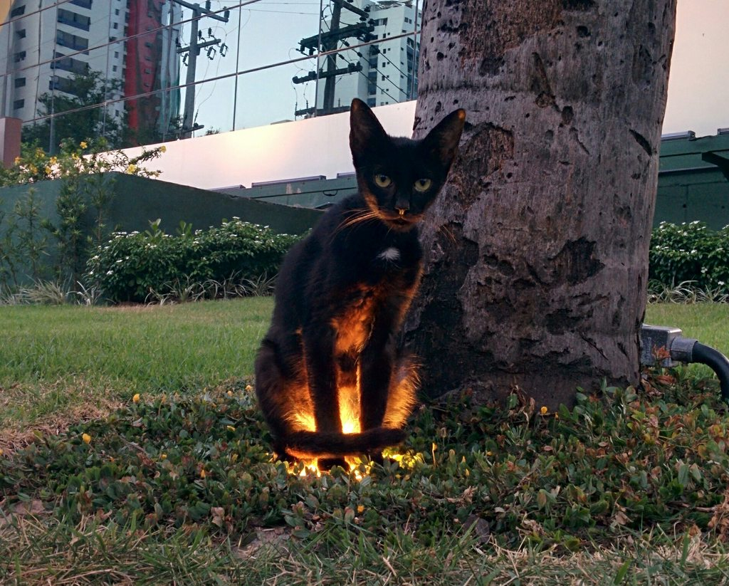 When you're walking in the park and an animal has a side quest for you…