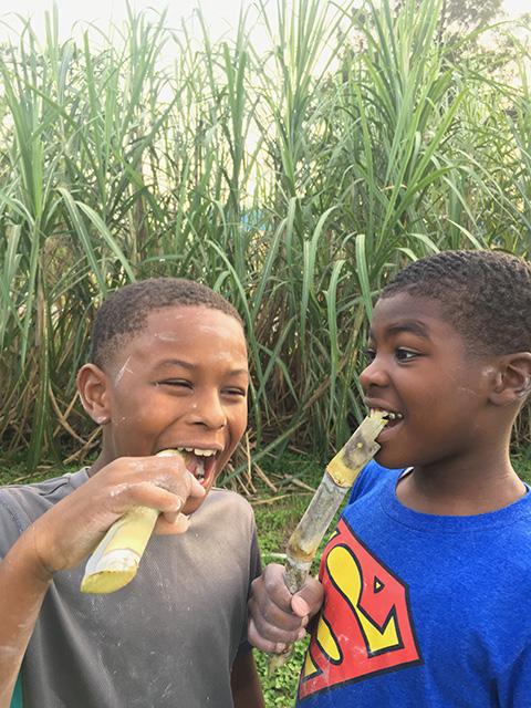 sugarcane - 2 copy.jpg