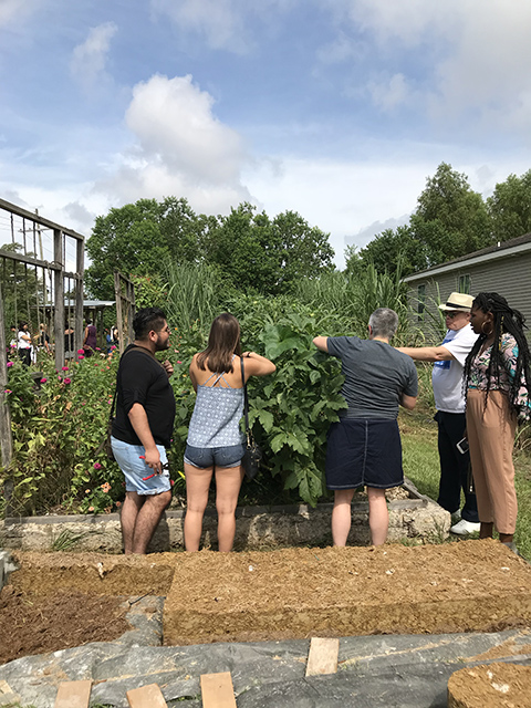 Visitors harvesting okra and eggplant from Choppers summer garden, July 2018