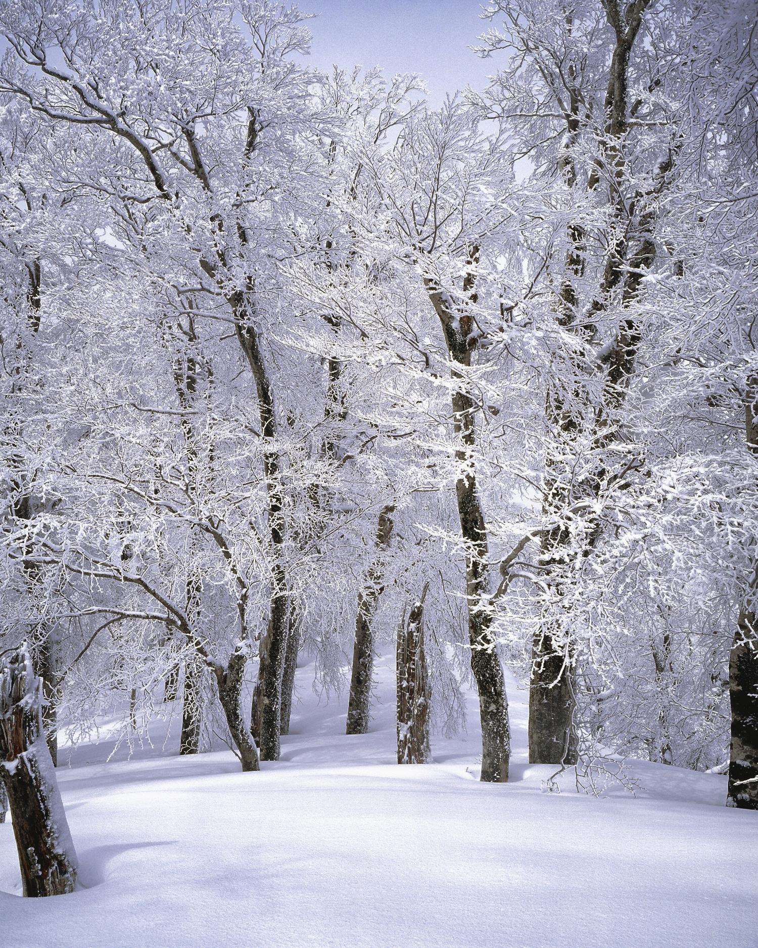 branch-cold-freezing-355403.jpg