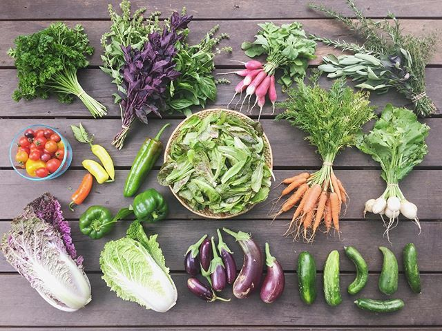today's box pick-up conversations included: feminism, intersectionality and representation; home-building, solar power and off-grid living; periods and the need to just have a day in bed sometimes!; and also a really beautiful chat about relationships and work and money and mistakes we've made and lessons we've learned.. veg box customers, you're the best 🧡