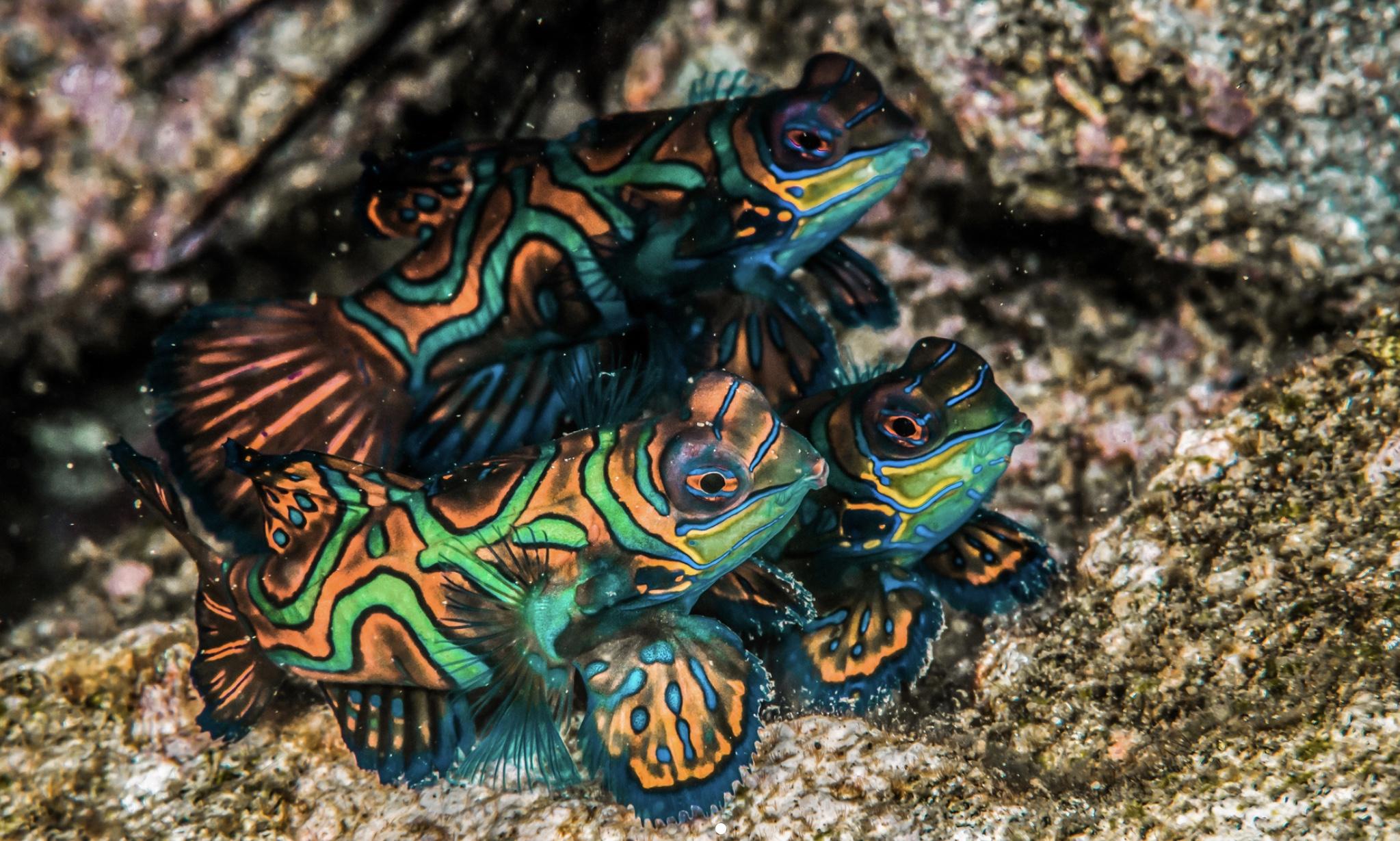snorkel banda