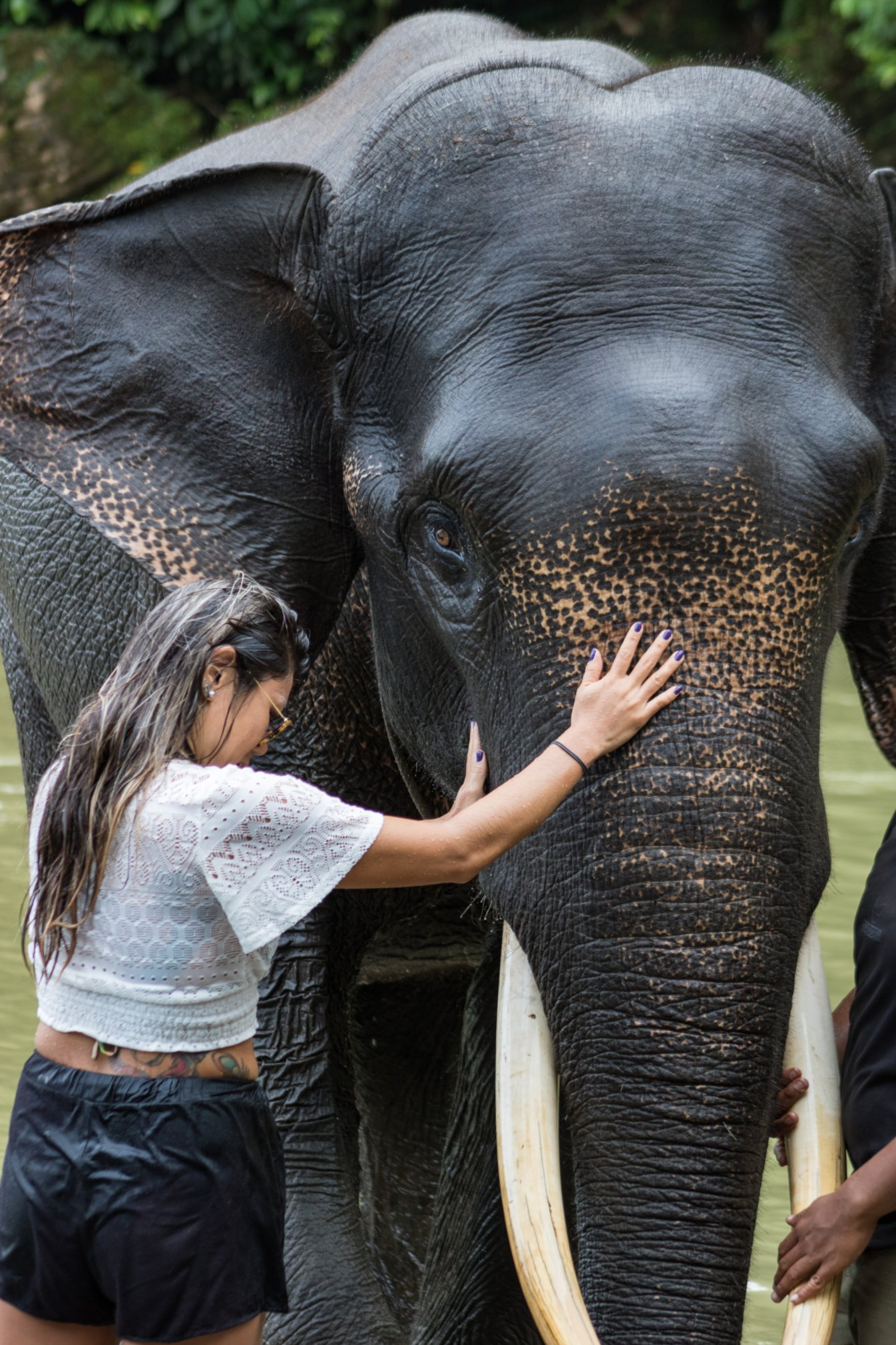 Interacting with elephants at Bukit Lawang National Park