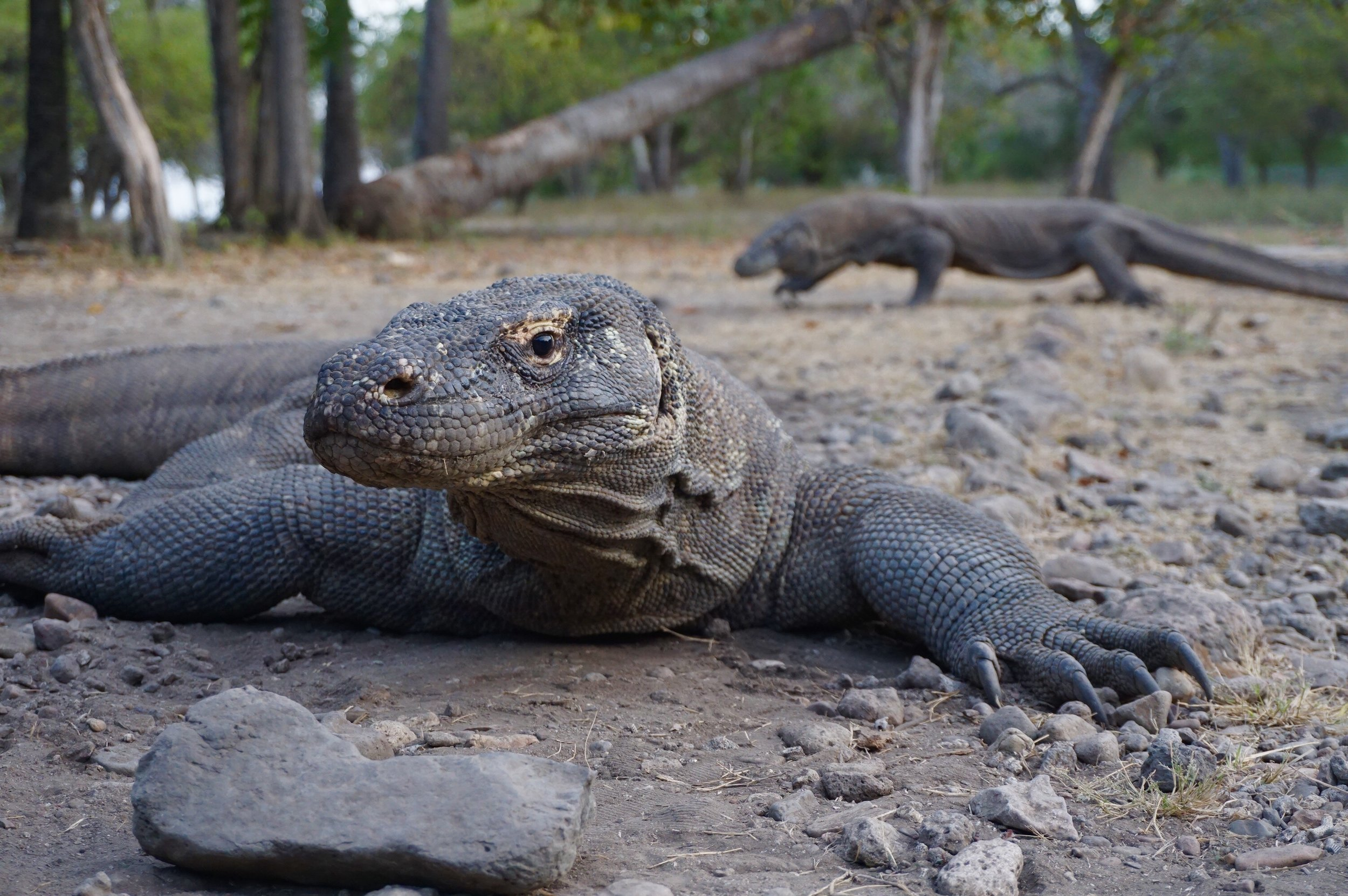 Komodo islands -