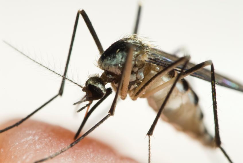 Mosquito3 (1).jpg