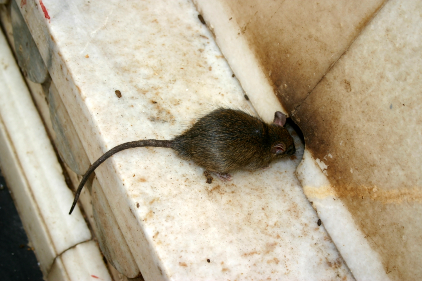 williamsburg Pest Control.jpg