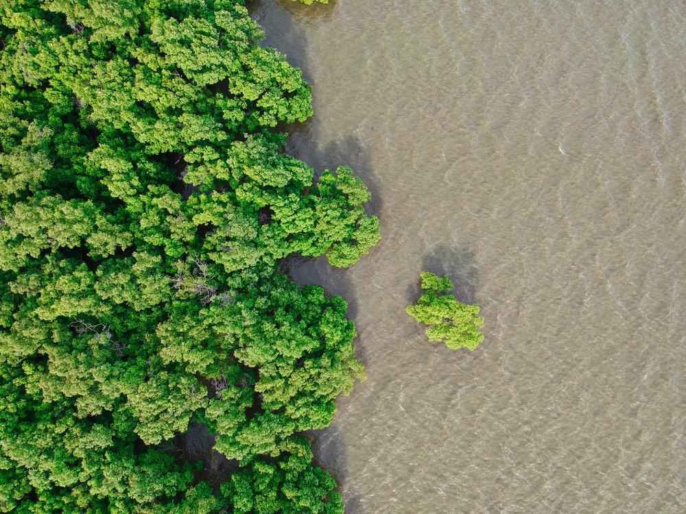 Drone view of mangroves in Itacaré, Bahia, Brazil (ETIV do Brasil)
