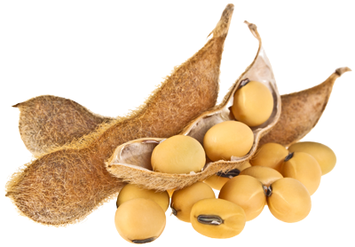 soybean_PNG13.png