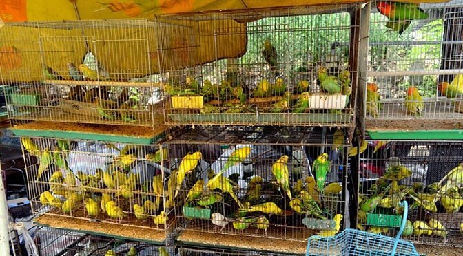 Fly in an jungle or stuck in a cage, what would you want?