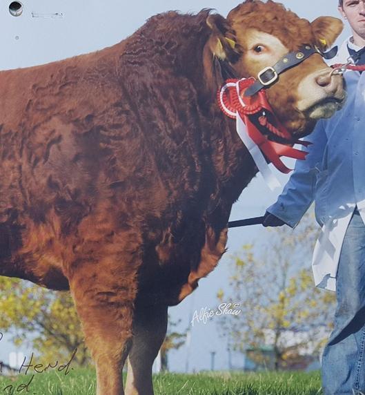 Baileys Eldorado - Sold for 17000 gns to the Graham Herd in Scotland