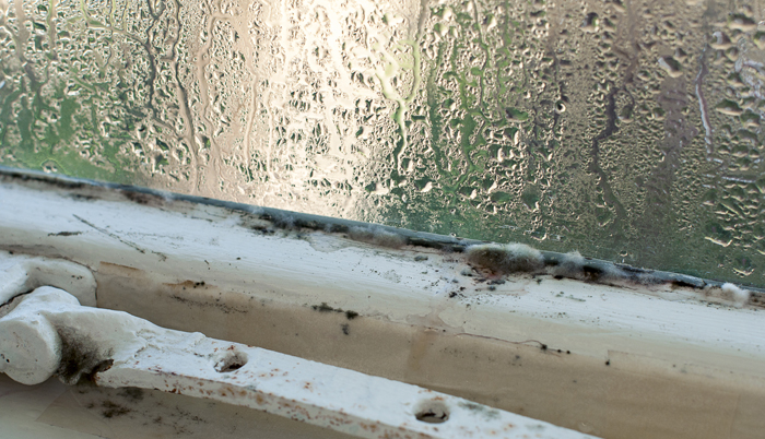 Mold needs three things to grow: moisture, food, and mild temperatures.