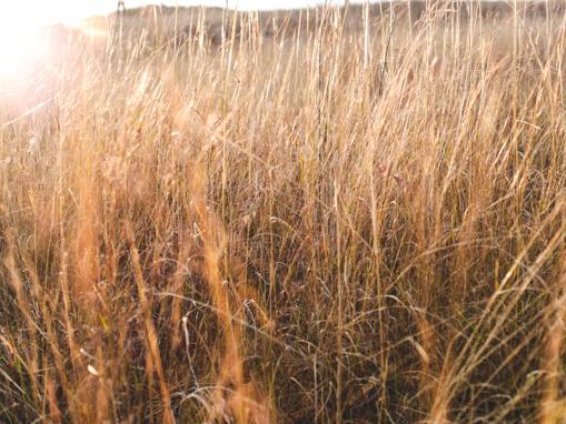 Khokho_Landscapes_Grass2.jpg