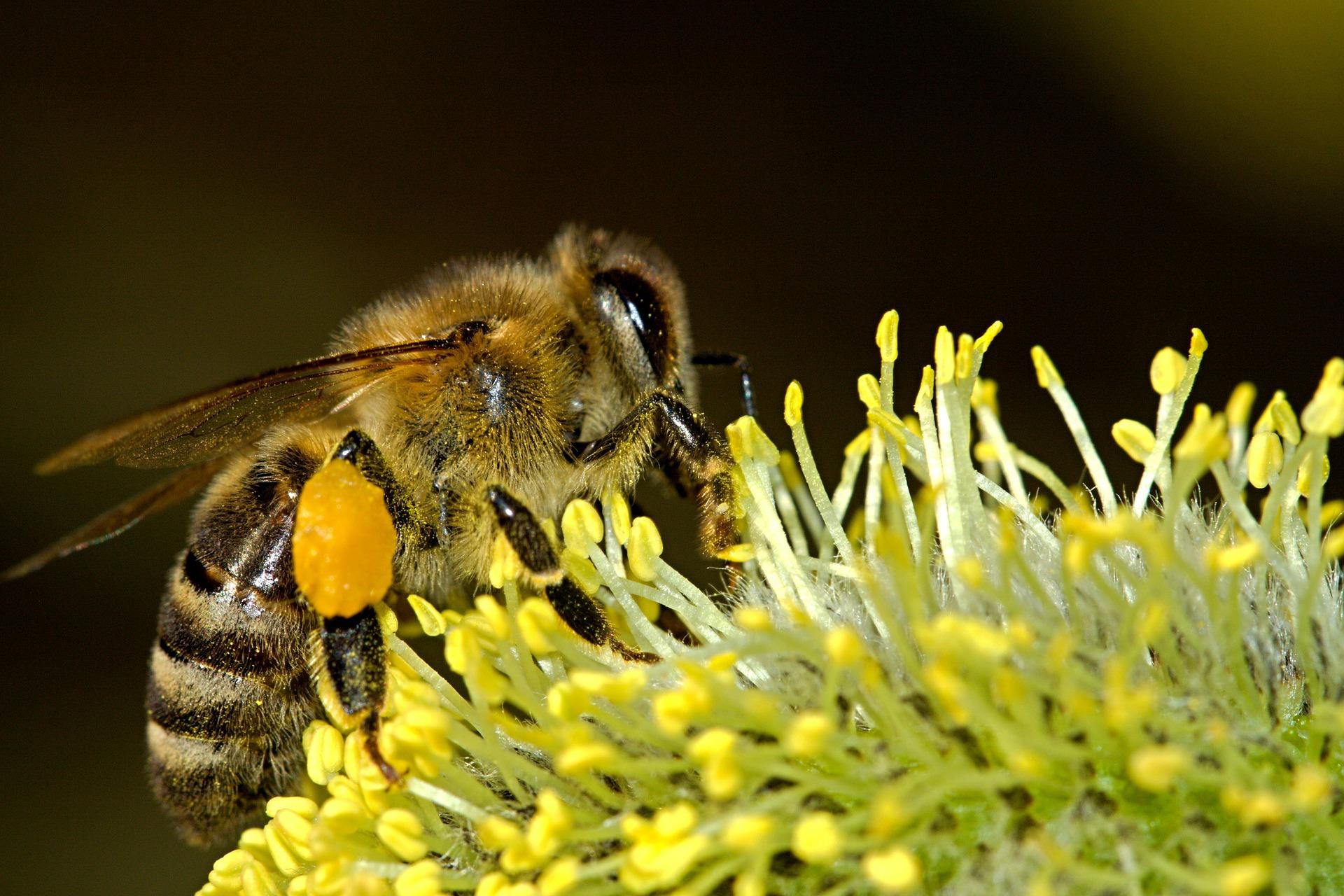 bees-18192_1920.jpg