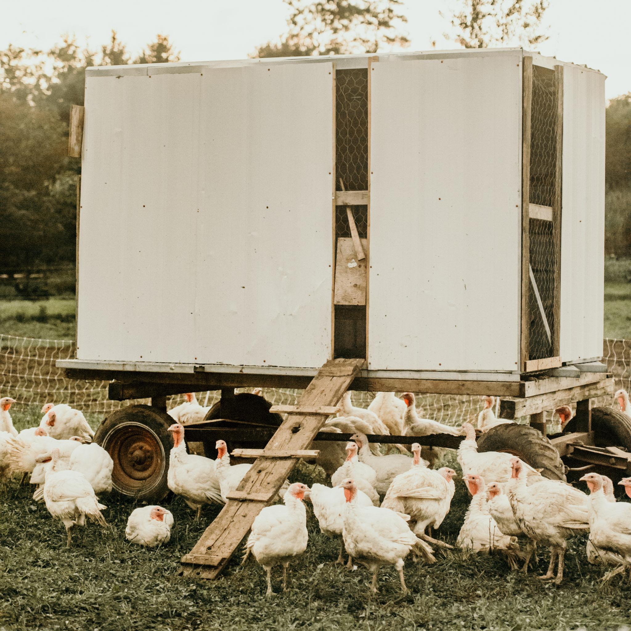 5-Chicks-Evening-032.jpg