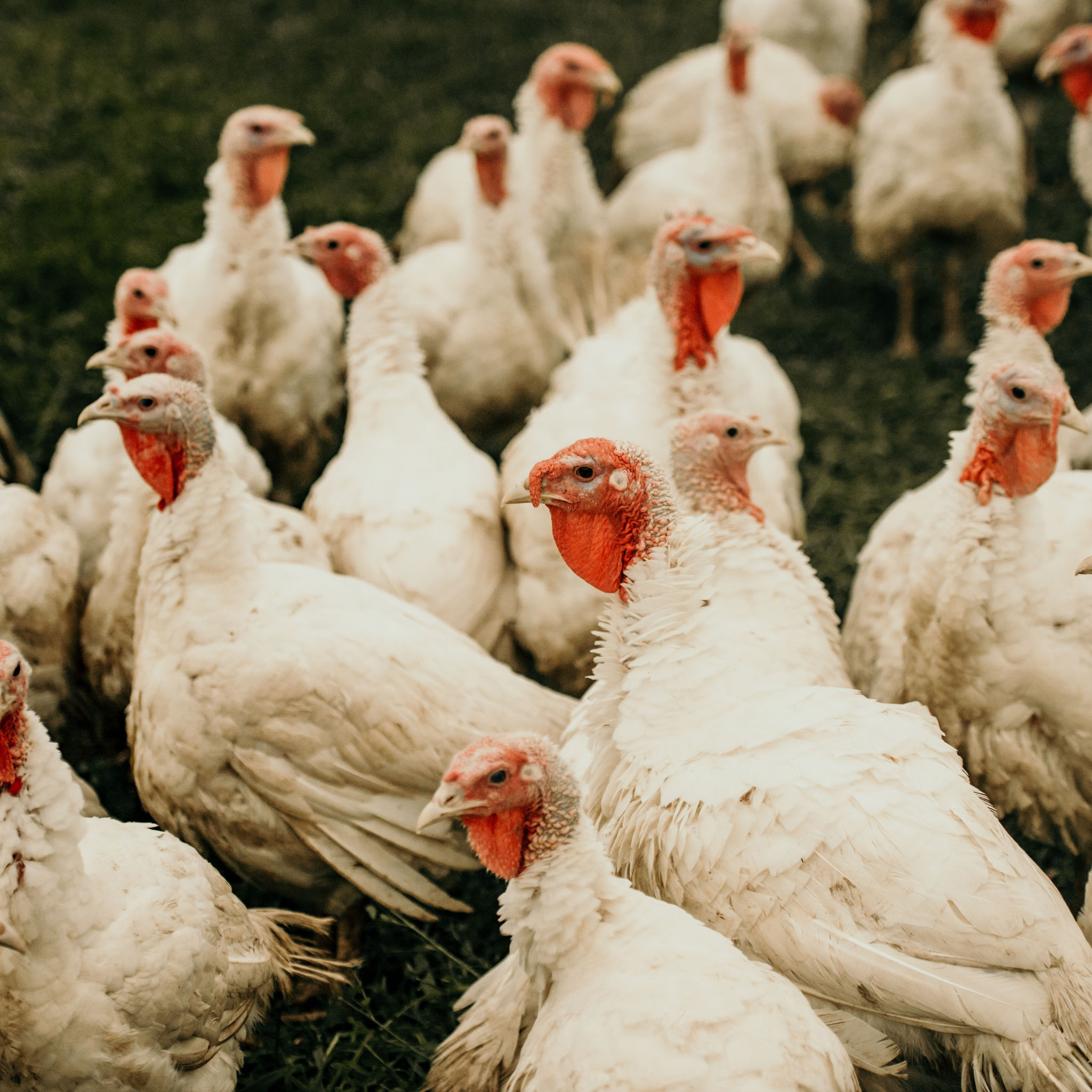 5-chicks-2nd-visit-20181003-18-59-35.jpg