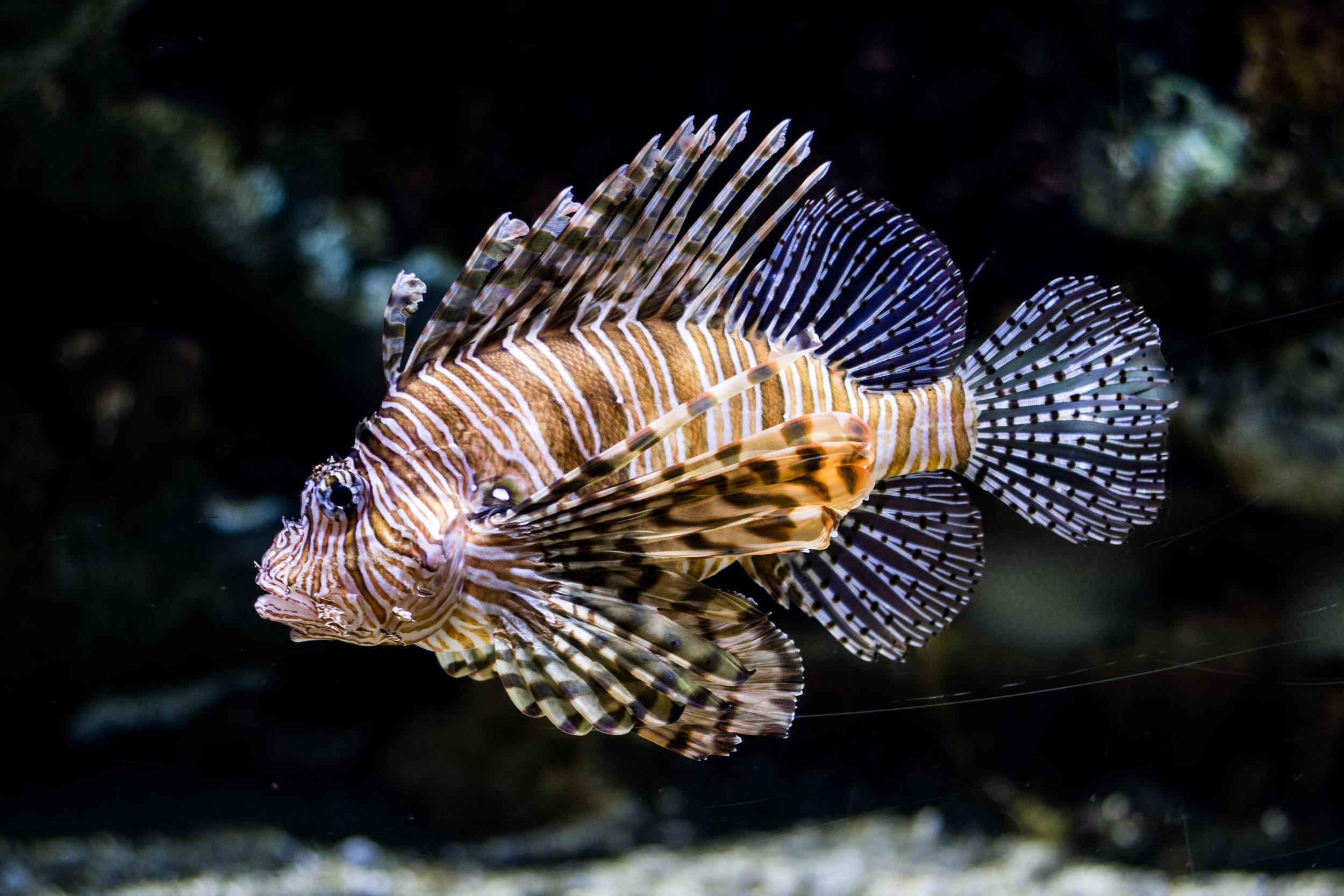 atlanta-aquarium.jpg