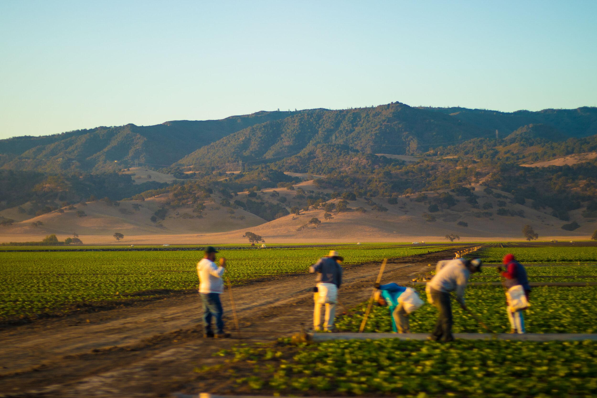 monterey-bay-farmers-california