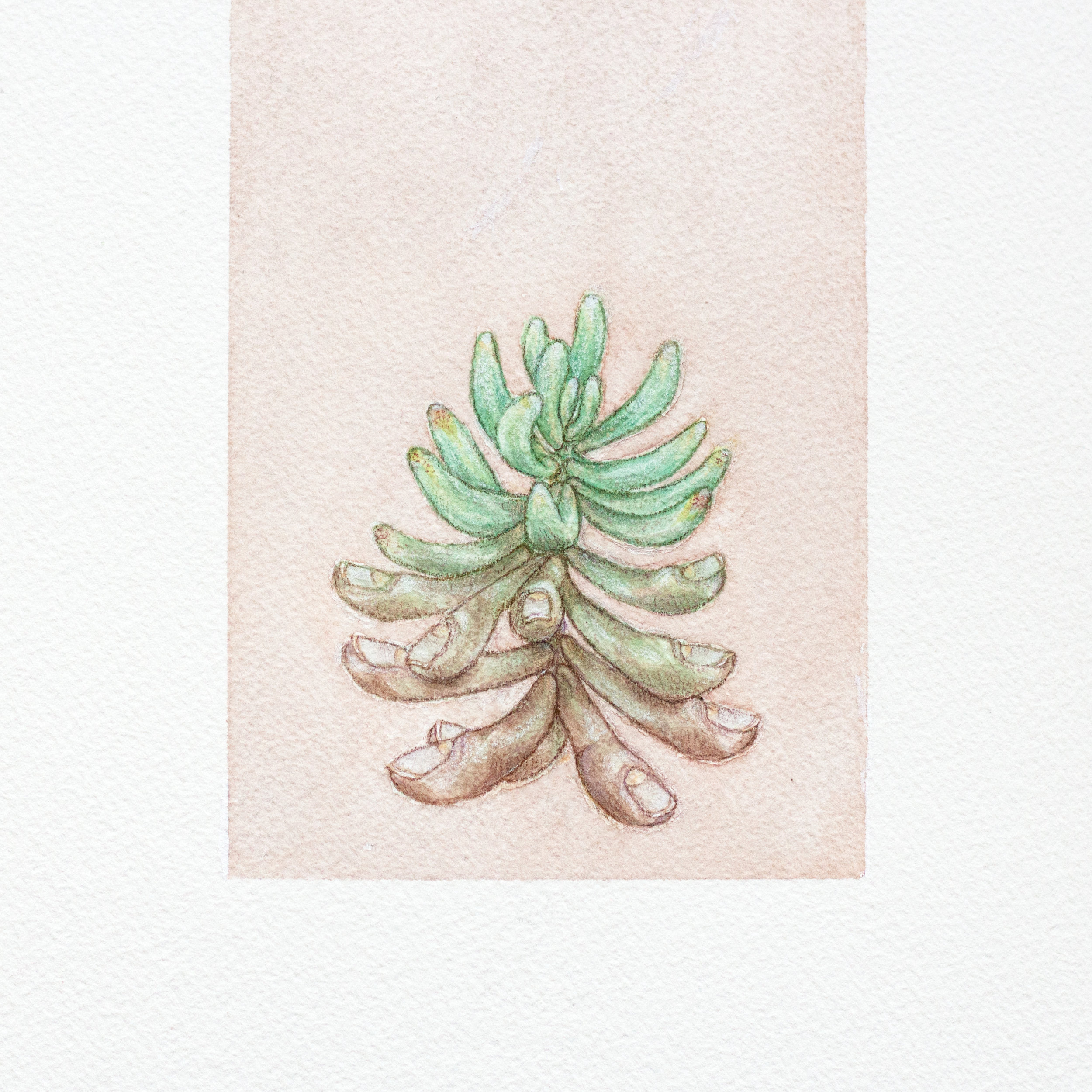painting-finger succulent.jpg