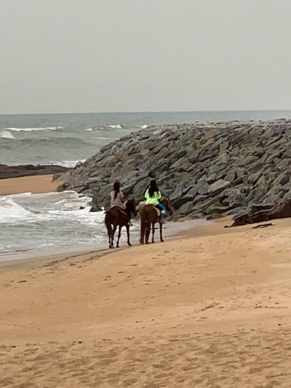 MJ_Kenya_Horses.jpeg