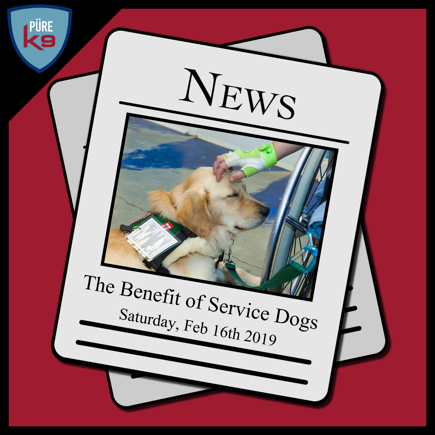 DIN-Logo_Service-Dogs.png