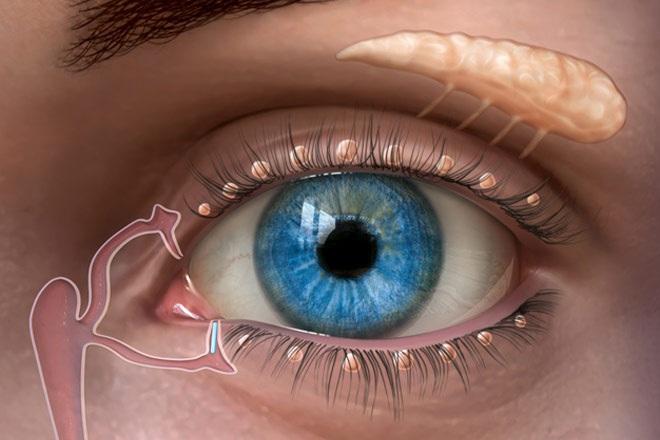 oasismed-lacrimal-glands-ed-660x440.jpg