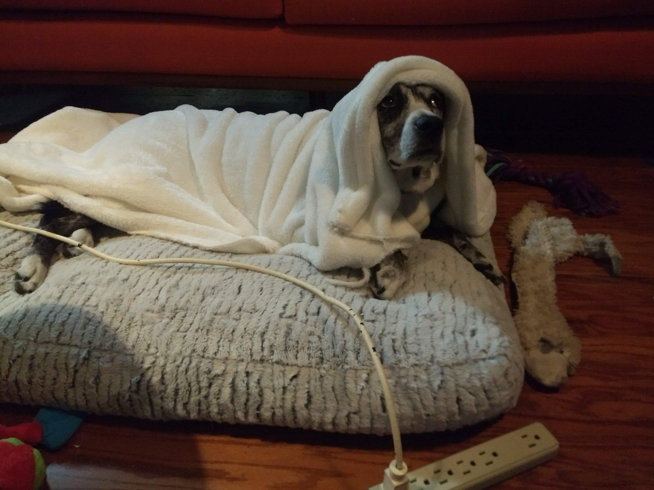 Laika taking a rest, after her big scene.