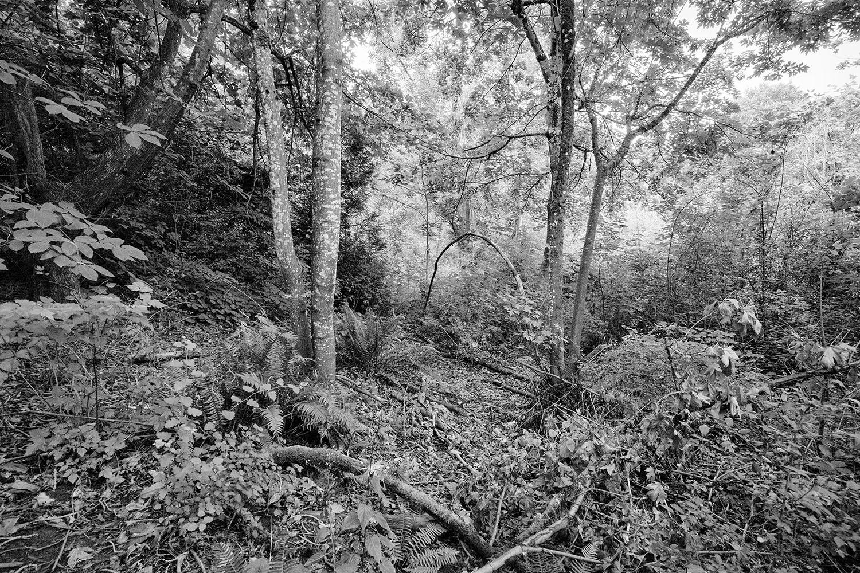 Reed Canyon