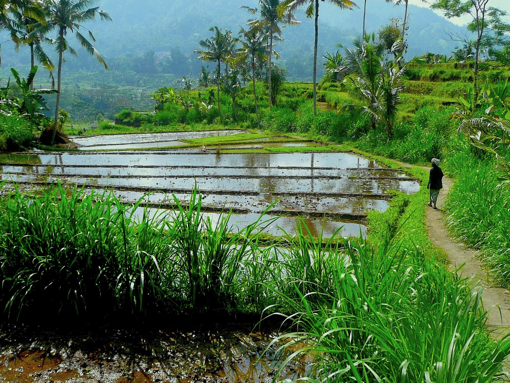Alila Manggis - Path into the Rice Bowl and the Ancestor  Temple.JPG