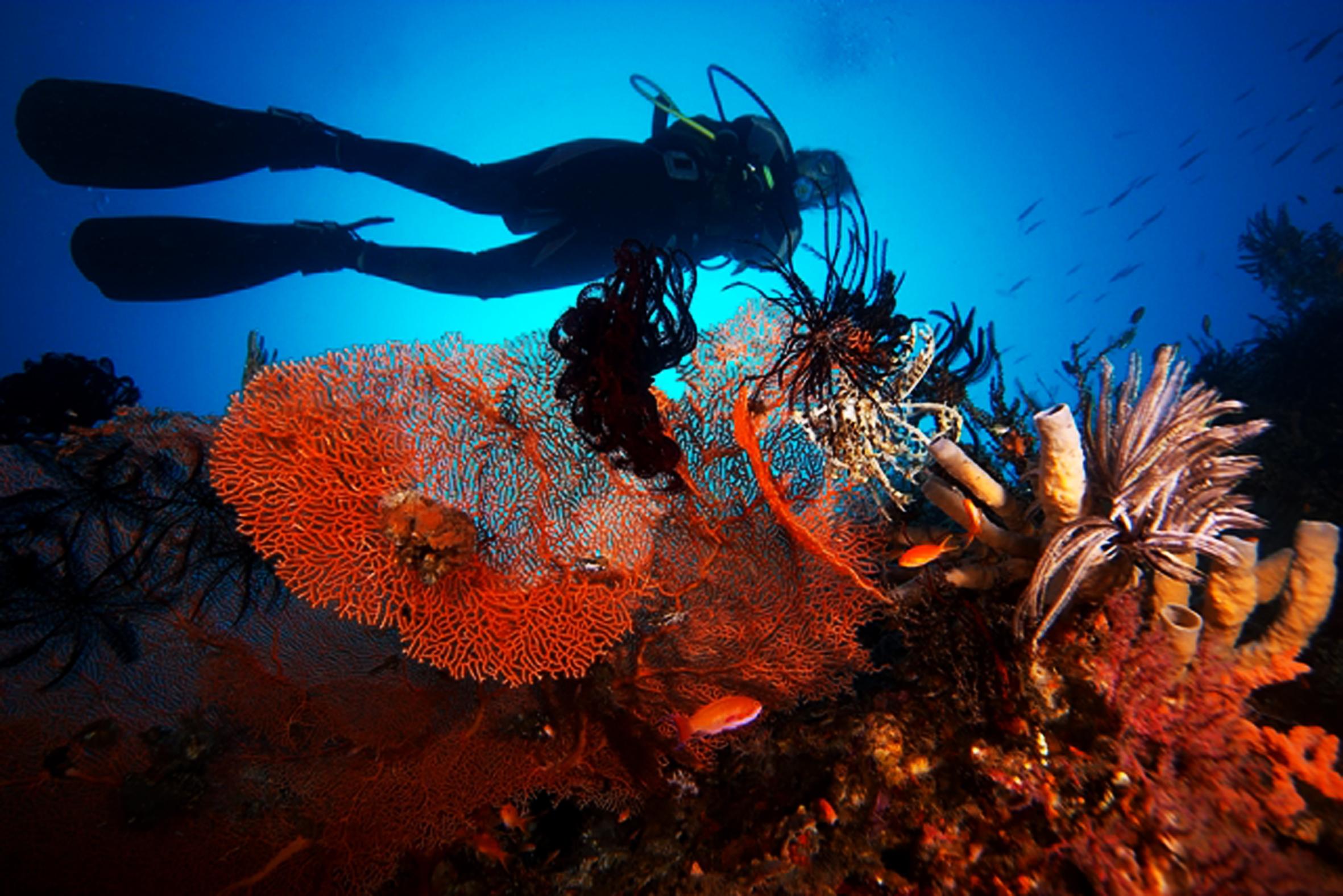 Alila Manggis - Coral Conservation 02.jpg
