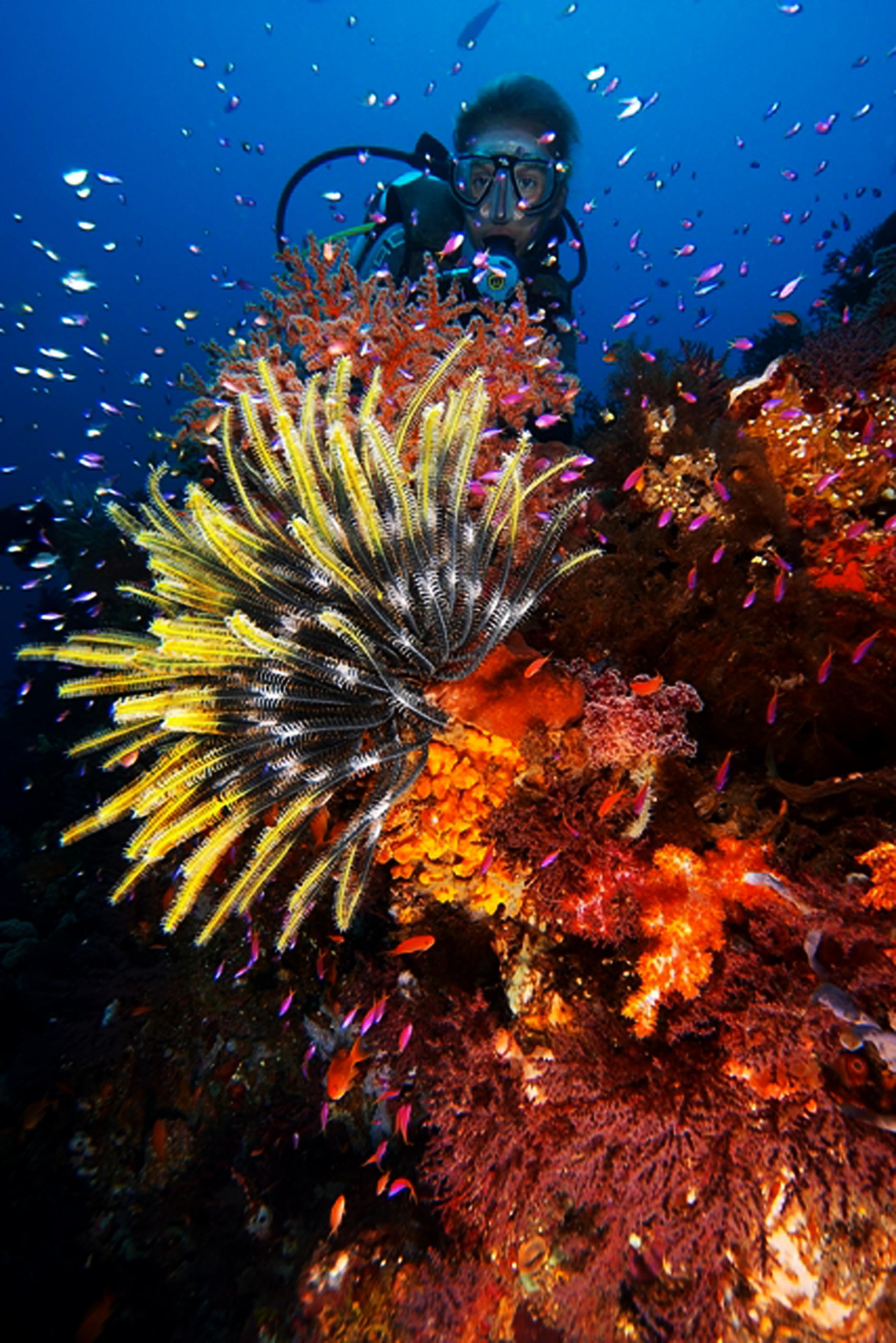 Alila Manggis - Coral Conservation 01.jpg