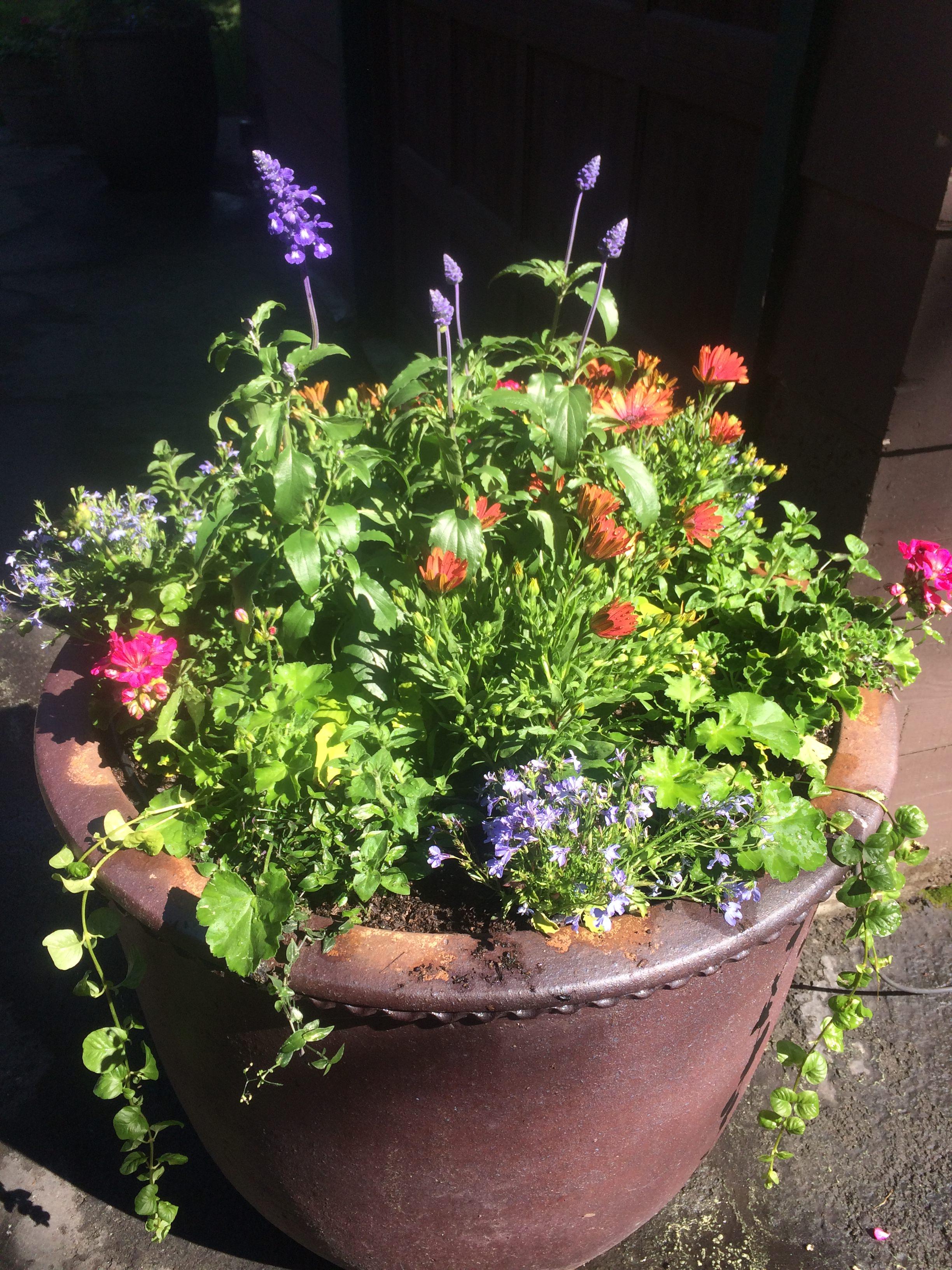 Fine Gardening 003.JPG