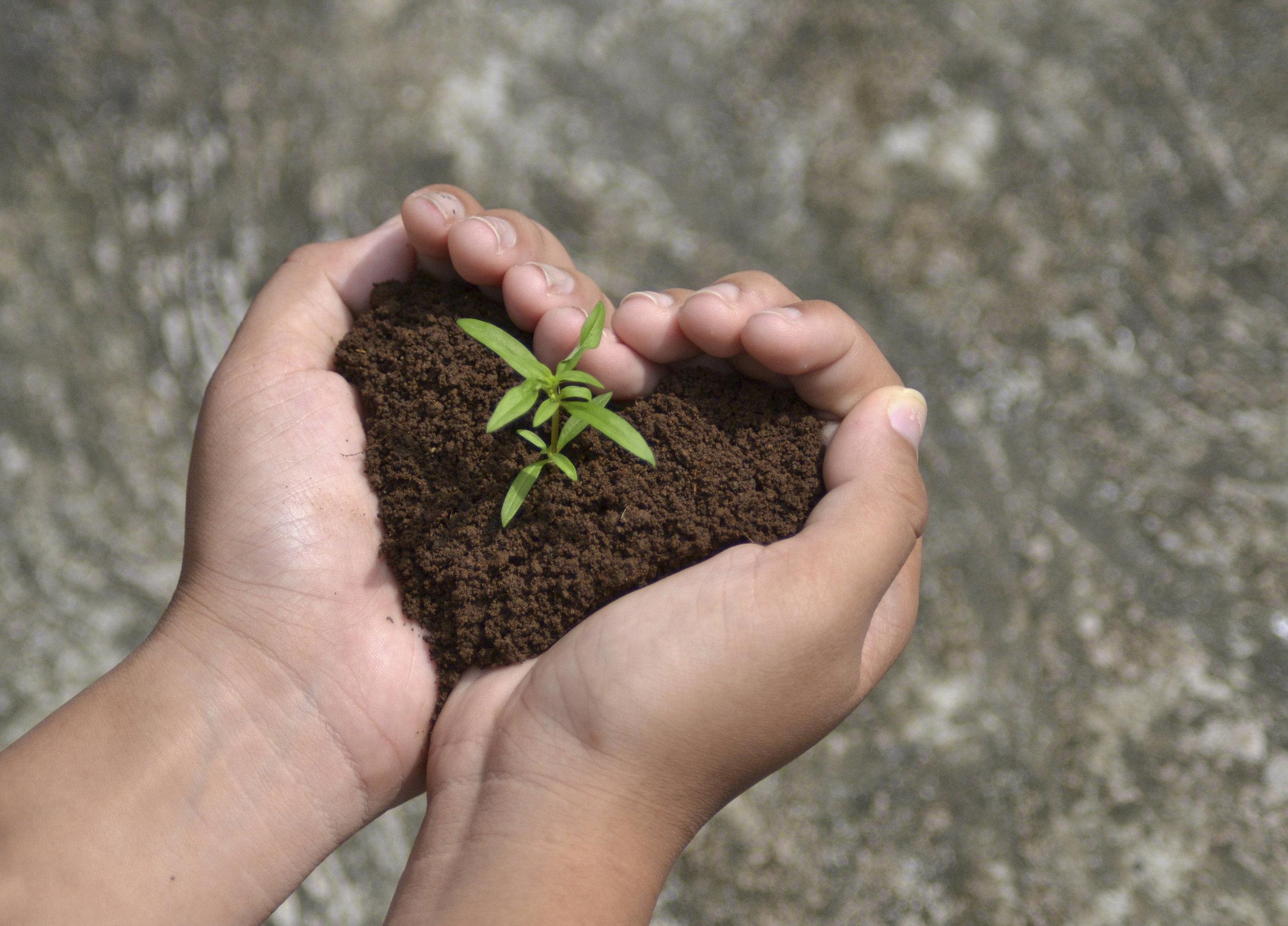 seedling-growing-in-hands-heart-shape-soil.jpg