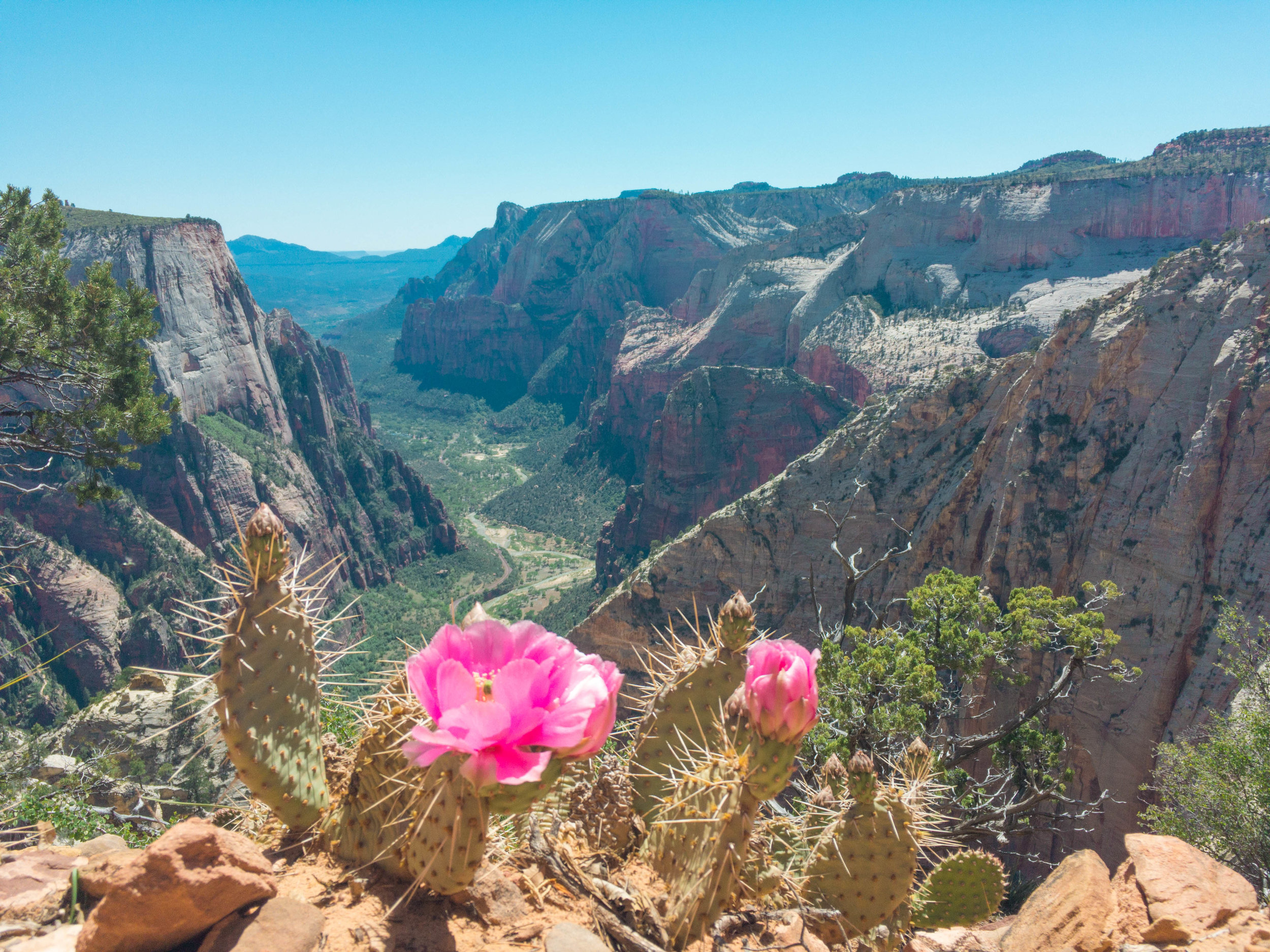 18 Instagrams Zion National Park.jpg