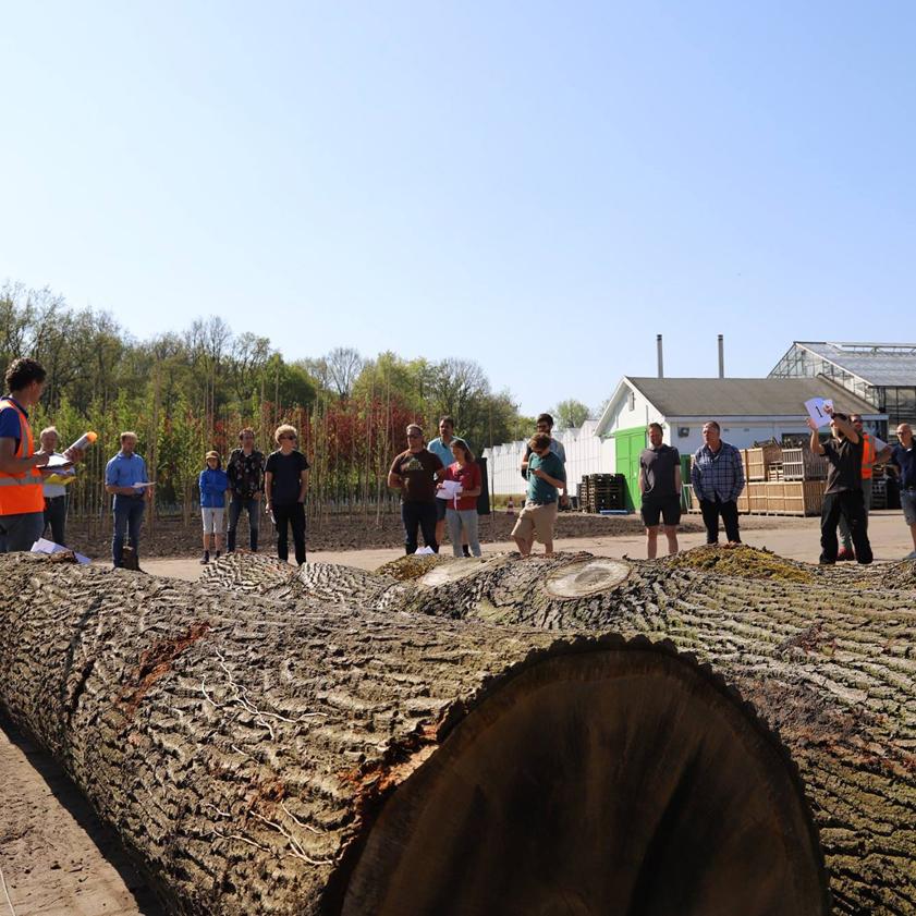 Allereerst verzamelen we de omgevallen en gekapte Rotterdamse booomstammen. We bepalen dan gelijk voor welk product de stam geschikt is.