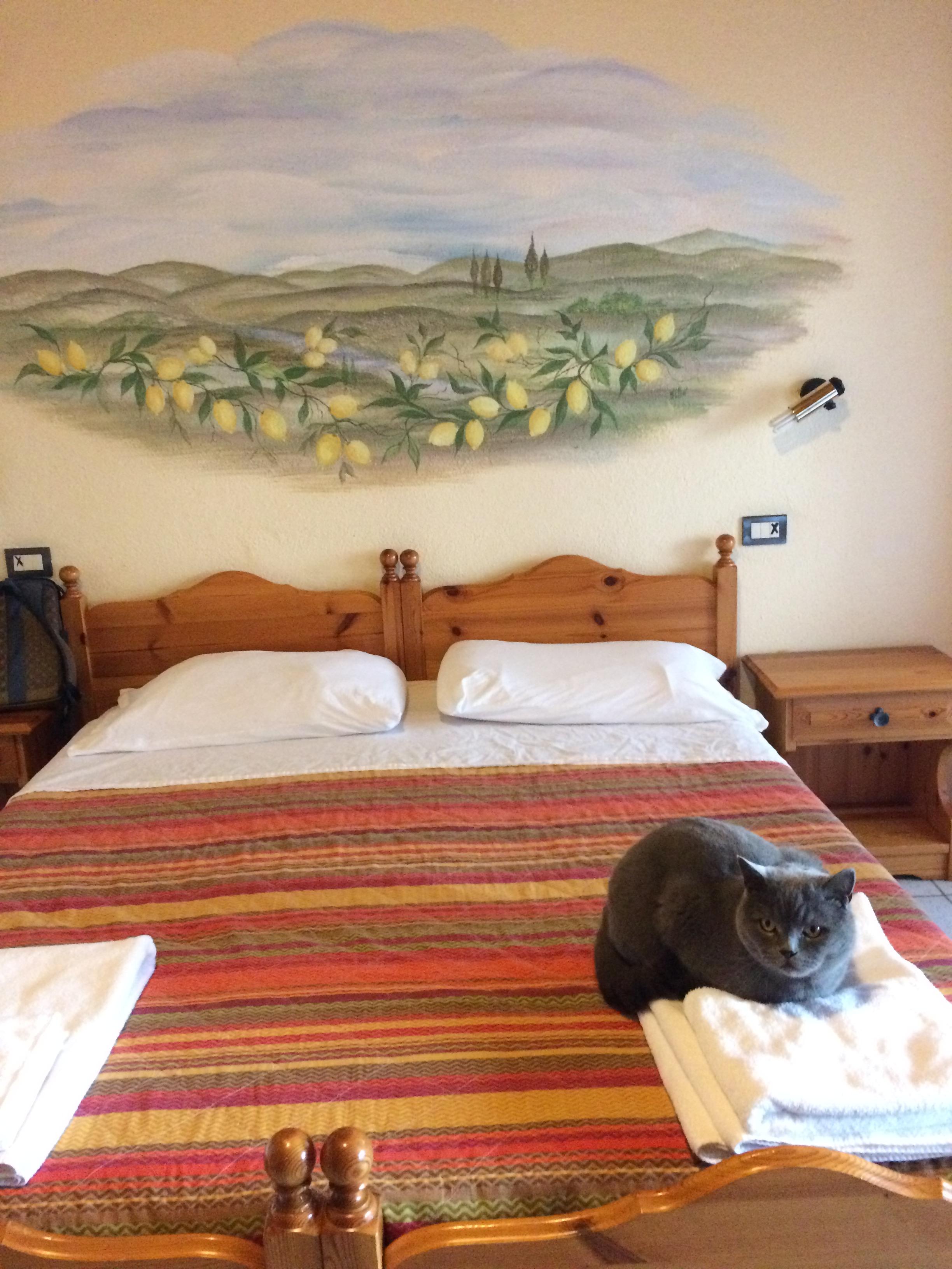 scuderia-castello-room-w-cat.JPG