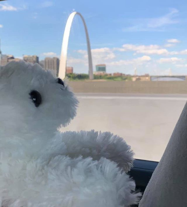 Catching a glimpse of the St Louis Arch from the back seat! 💜 🚙 #pearlsroadtrip