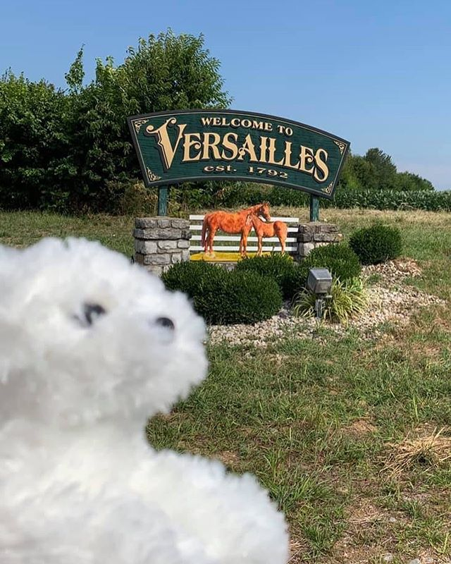 Wow! Versailles twice in one year! Pearl is a lucky pup! 🍀 🐾
