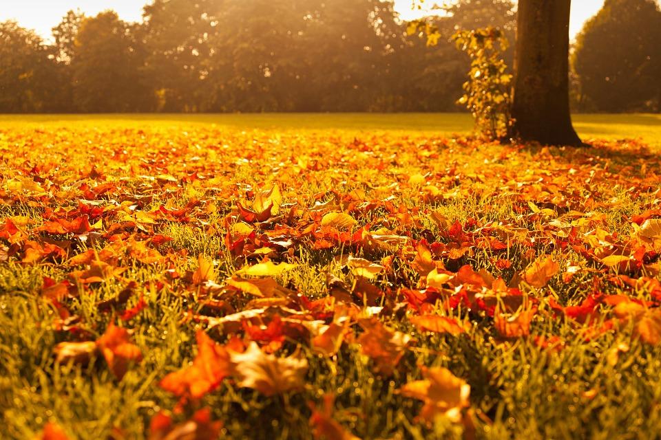 autumn-72736_960_720.jpg