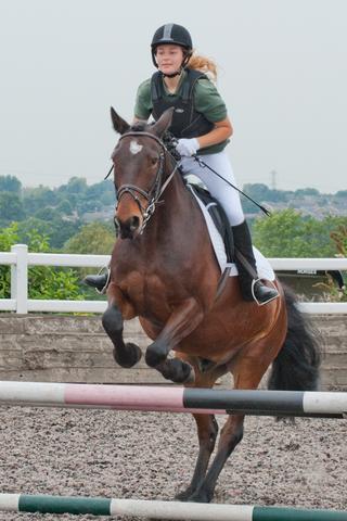 Horse83.JPG_harrison-001.jpg