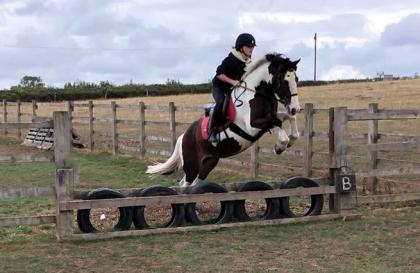 CLOUD RED - Cloudy is on loan to Witham Villa having been outgrown by her owner.She is a lovely pony and takes part in pony club activities, dressage, jumping and cross country here.Height: 14 Hands HighColour: SkewbaldYear of Birth: 2007Stable Name: CLOUDY