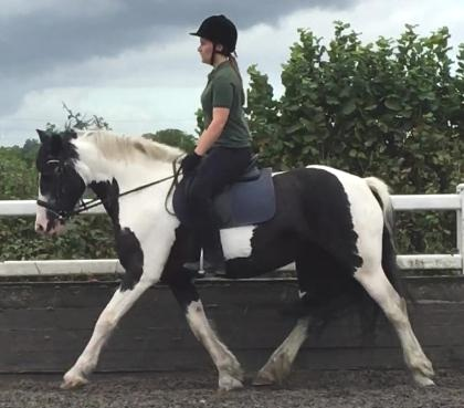 ALL THAT JAZZ - Jazz was in the school at Bunny Hill Top prior to coming to Witham Villa.She takes part in all riding school activities, enjoying jumping and flatwork.Height: 15.1 Hands HighColour: PiebaldYear of Birth: 2001Stable Name: JAZZ