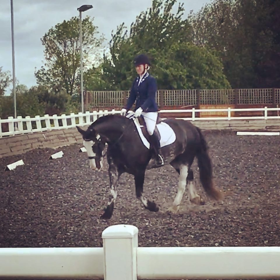 ROSIE - Lovely kind mare who came to us in the summer of 2018 having been in a private home previously doing flatwork, jumping and hacking.Height: 15.2 Hands HighColour: Black RoanYear of Birth: 2010Stable Name: ROSIE