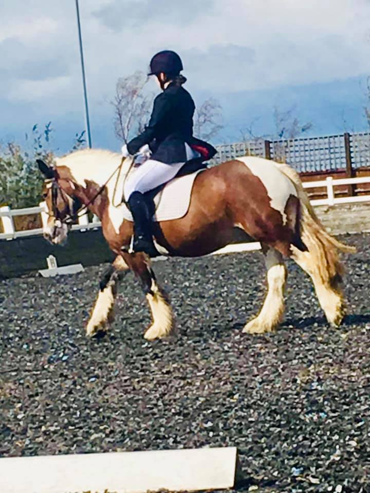 CINDERS - A lovely kind cob who joined the team at Witham Villa in October 2018.Height: 14.2 Hands HighColour: SkewbaldYear of Birth: 2013Stable Name: CINDERS