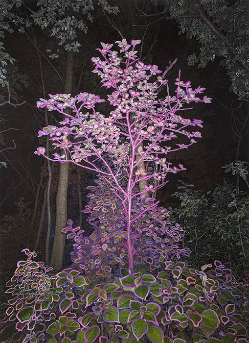 "Pink Tree in the Night,  2018, Edition of 3, Pigment print, 55"" x 40"""