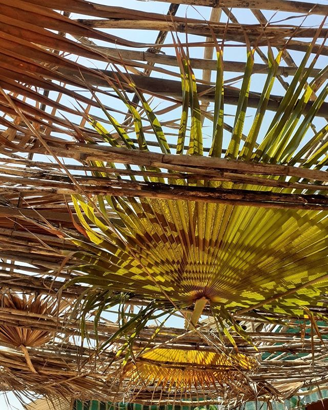 Super shade going up at HappyToes - Fan Palm and Spanish reeds #natural #shade #permaculture #ecofarm #eco  #naturalbuild #green #southafrica #farm
