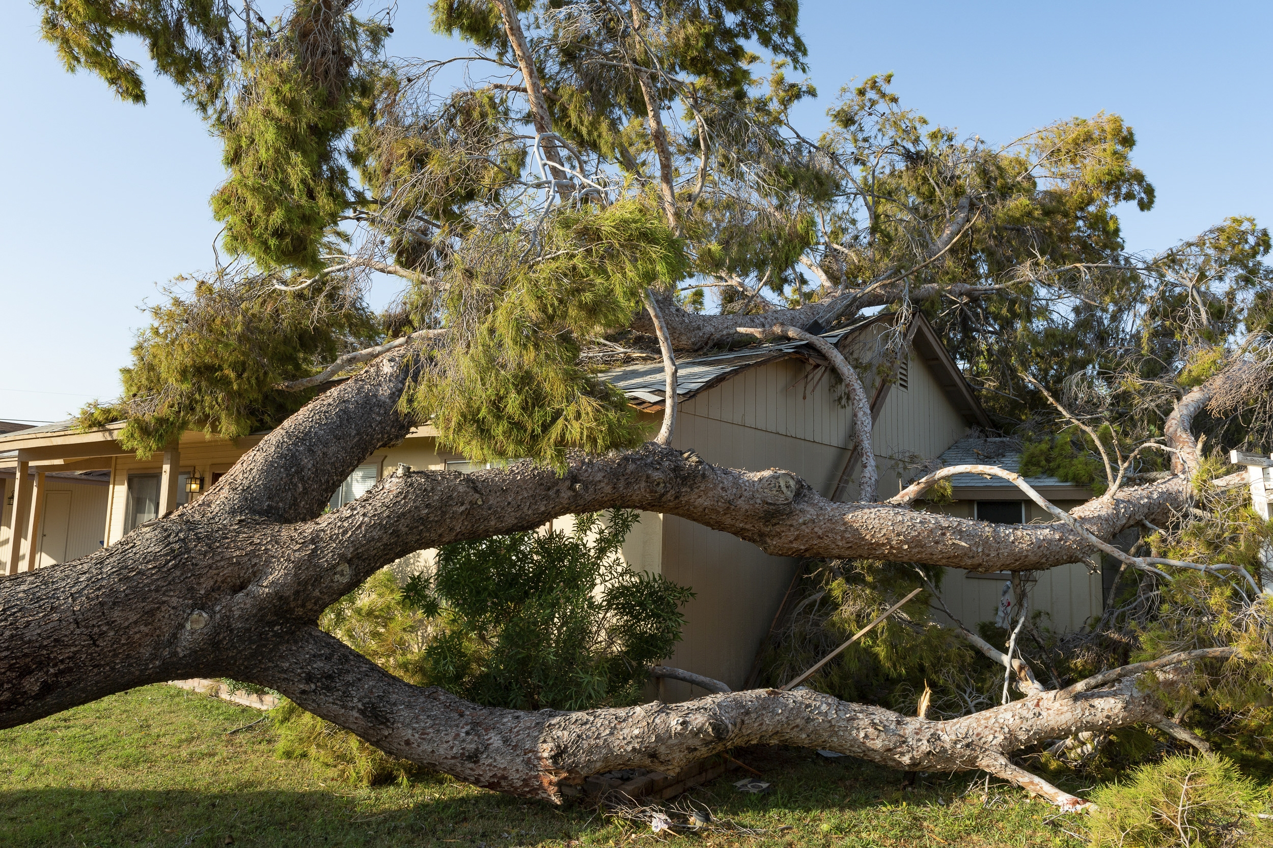 WIND & STORM - Storms can catch you off guard and cause catastrophic damage to your  home or business. Storms present a complex process of assessing and  documenting the full extend of your damage.