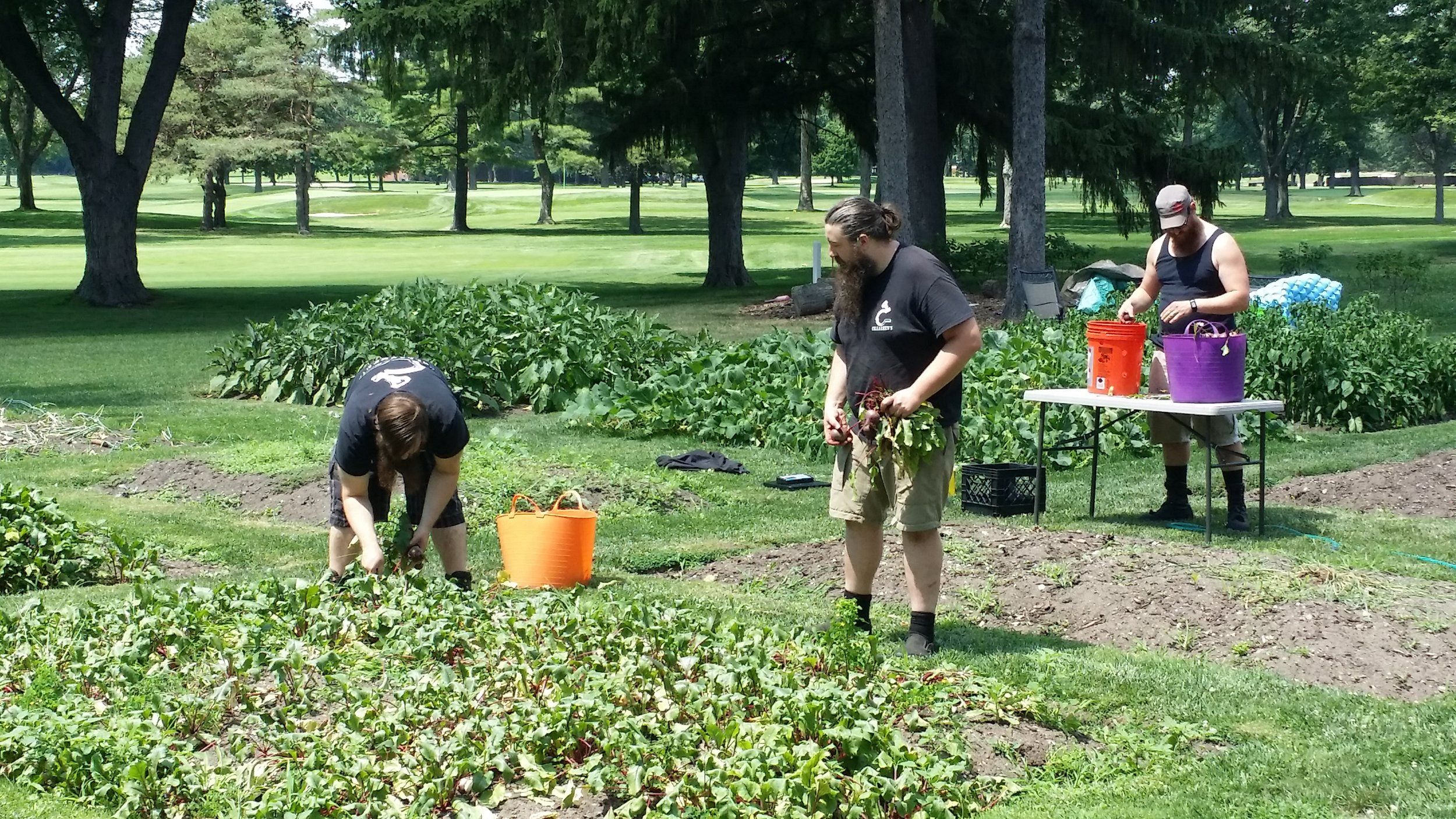 Dominic, Ian, and Andrew from Cellarmen's Meadery helping out with the big beet harvest!