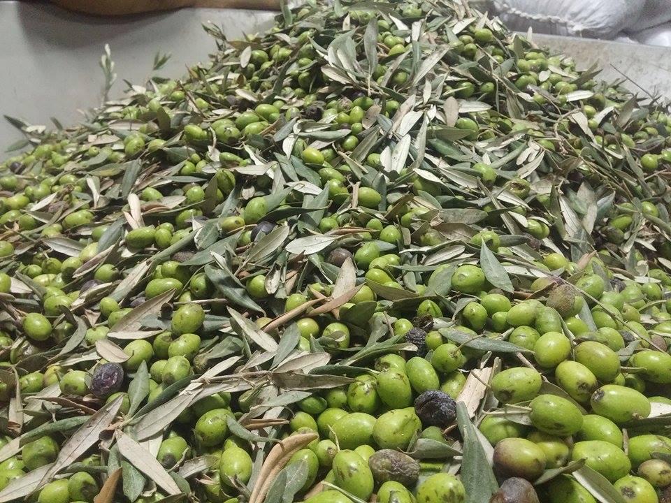 olives1.jpg